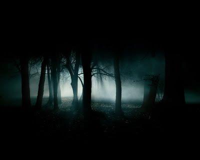 dusk woods