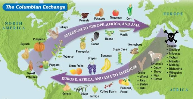effects of the columbian exchange and tobacco Columbian exchange is a term that refers to the exchange of plants and animals between the new world and europe following the discovery of america in 1492.