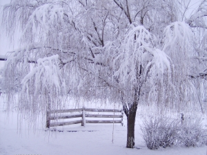 Beautiful-Winter-Wallpaper-110