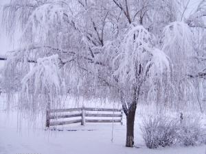 Beautiful-Winter-Wallpaper-110