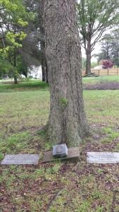 Kippax Tree Plaques